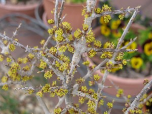 Backyard NM Privet